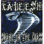 Caleesh - Snake In The Grass