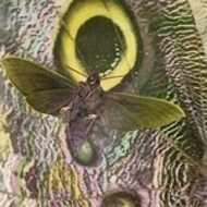 The Mothmen - Pay Attention